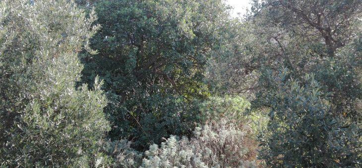 L'olivo e il Bosco, percorso evolutivo e il ruolo del genio umano