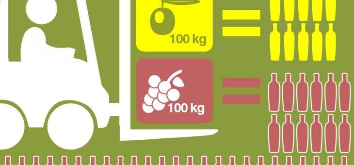 Quanto Olio si FA con 100 kg di Olive?