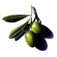 oliveselselogo