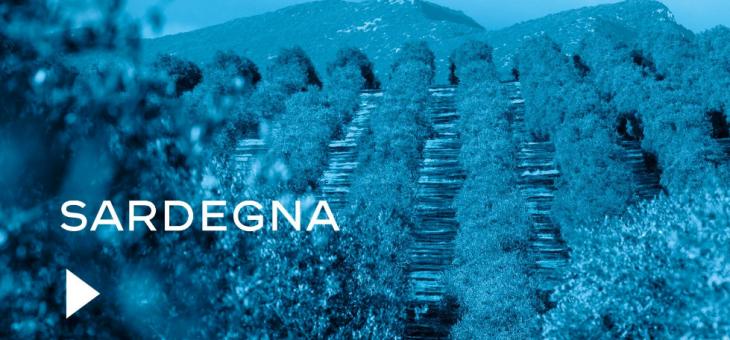 Sardegna, l'extravergine e la scommessa di Maria Grazia Olmeo